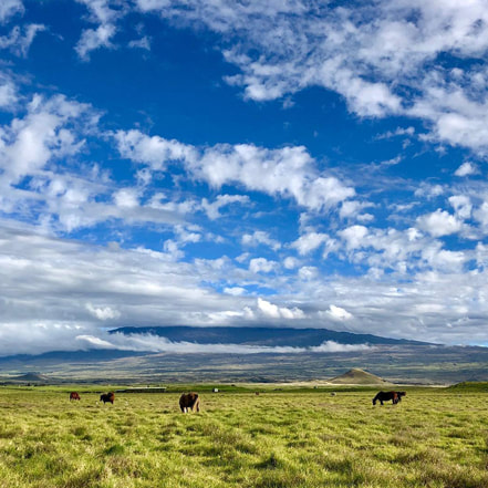 Beautiful field in Big Island with horses and mountain back drop